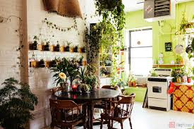 Apartment Plants | indoor apartment plants my sqft inside summer rayne oakes