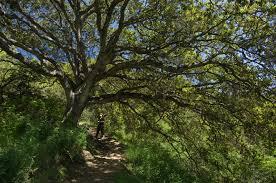 native plant network native trees and shrubs habitat network
