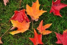 fall color green peanut butter north carolina arboretum