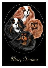 cavalier king charles spaniel cards