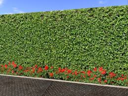 Flowering Privacy Shrubs - second life marketplace red flowers and bush hedge privacy