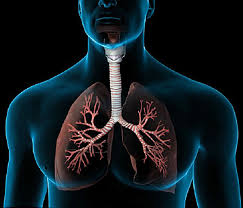 Webmd Human Anatomy Lungs Video How They Help You Breathe Oxygen