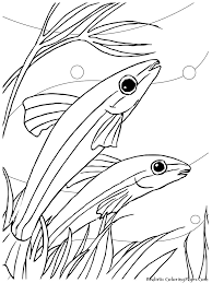 coloring pages tropical fish coloring pages redcabworcester