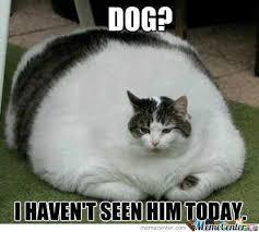 Can I Meme - i can haz dogz by dcarnage meme center