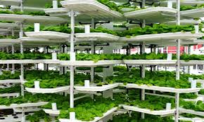 Urban Food Gardens Vertical Farming Explained How Cities Could Be Food Producers Of