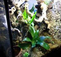 red eyed tree frog habitat u0026 vivarium tank setup