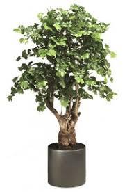 artificial pine bonsai tree uv the artificial plants shop