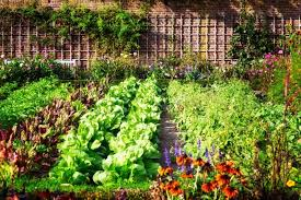 how to plan a vegetable garden angie u0027s list