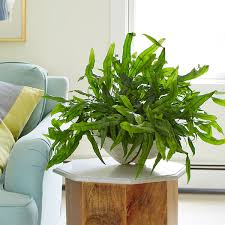decorate your home with exotic angel plants costa farms