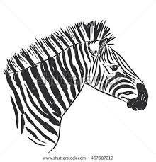 sketch zebra stock vector 376777540 shutterstock