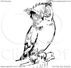 clipart owl black and white clipart of a retro vintage black and white owl royalty free