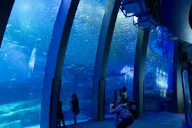 yokohama sea paradise more than an aquarium play with sea