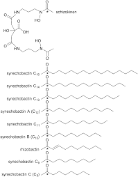 an extended siderophore suite from synechococcus sp pcc 7002