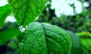 free stock photo of closeup drop of water green