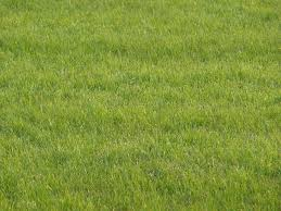 build lawn up before winter gardening ara the approach of fall