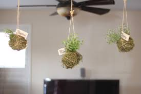 extraordinary hanging indoor plants with herb f garden planter