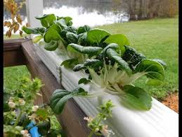 rain gutter system on grow aquaponically