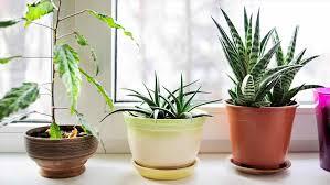 Indoor Plants Low Light by Indoor Plants Low Light Clean Air Darxxidecom