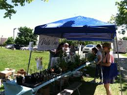 native plant sales photos and videos wild ones red cedar chapter lansing michigan