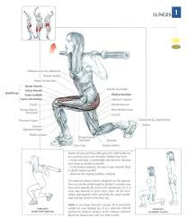 Anatomy And Physiology Exercise 10 The Lunge Exercise Muscle Anatomy Muscle Anatomy Lunges And