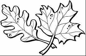 beautiful fall leaves template coloring page with leaf coloring