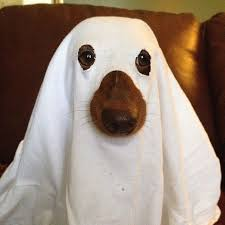 Halloween Ghost Costumes Ghost Pet Costumes Costumes Dog