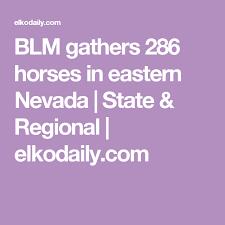 Blind Onion Elko Nv Blm Gathers 286 Horses In Eastern Nevada State U0026 Regional