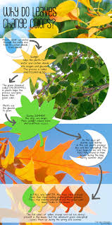 best 25 leaves changing color ideas on pinterest intarsia