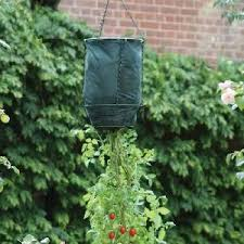 upside down hanging tomato strawberry planter from patio growing