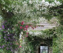 5 fragrant climbers sa garden and home