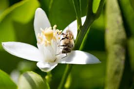 Flowers Bees Pollinate - neonicotinoids what home gardeners need to know mnn mother