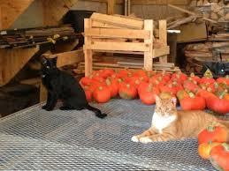 Backyard Buddies Catsparella Backyard Buddies Program Gives Barn Cats A Forever Home