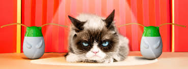 cat u0027s out of the bag u2026grumpy cat reveals her top ten pet peeves in