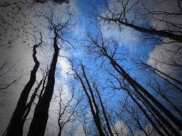 free photo black trees wood scary fear free image on pixabay