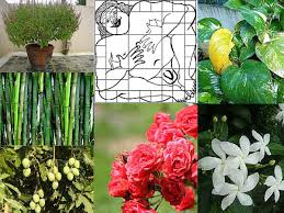 vastu tips for plants and trees dream home guide