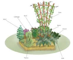 straw bale garden layout 28 images how to grow a straw bale