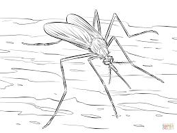 mosquito culiseta longiareolata coloring page free printable