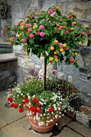 Fragrant Potted Plants - best plants for balcony garden
