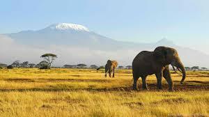 apple wallpaper elephant elephant mac wildlife elephants 2560x1440 hd wallpapers and free