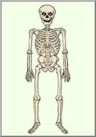 halloween shop vintage life size jointed skeleton cutout d