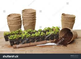 seedling plug plants compost fiber plant stock photo 96999704