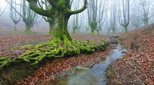 imagenes impresionantes de paisajes naturales impresionantes paisajes de nuestro planeta 20 fotografías