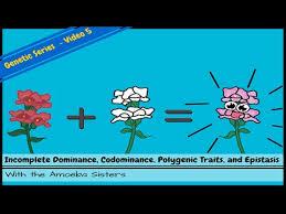 incomplete dominance codominance polygenic traits and epistasis