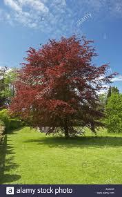 ornamental trees in duffryn gardens st nicholas south glamorgan