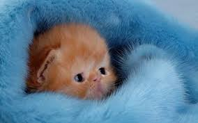 47 kittens wallpapers hd quality kittens images kittens