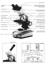 compound light microscope parts and functions www bioquip com prod images 6066 002 parts of the