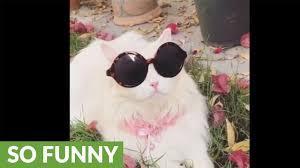 Sassy Cat Meme - sassy cat bird watches in style youtube