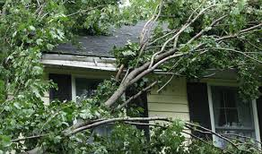 homeowners insurance and fallen trees allstate