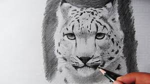 how to draw a snow leopard speed drawing zeichnen youtube