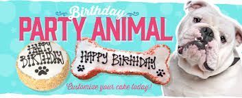 dog birthday cakes cookies u0026 treats fresh baked dog food dog bakery